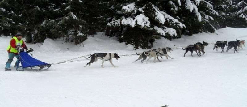Na czas wyścigów psich zaprzęgów trasy są zamykane dla narciarzy