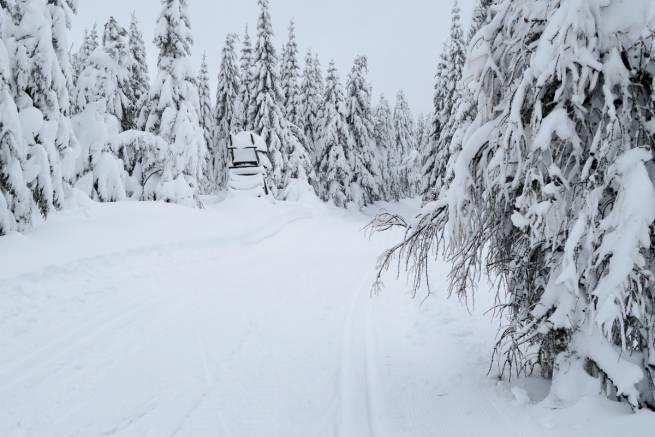 Jakuszyce zasypane śniegiem