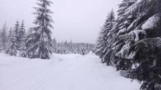 Warunki na trasach 1 lutego 2018 [RAPORT]