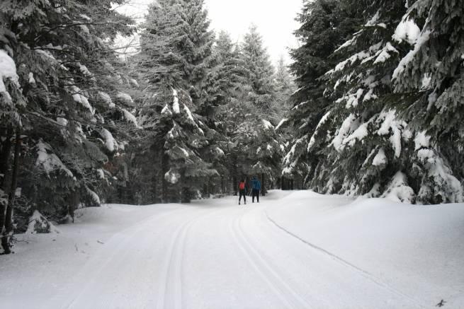 Trasy biegowe w Górach Bialskich
