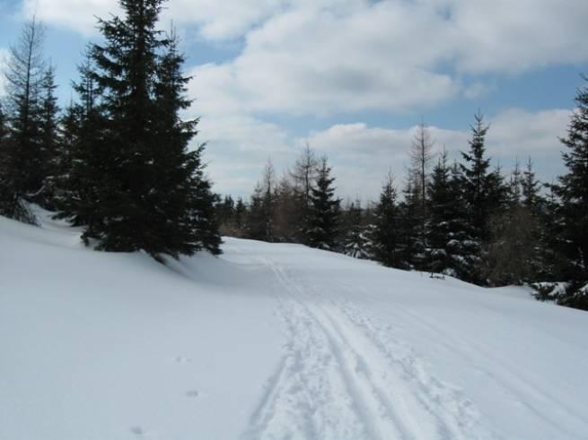 Decyzja zapadła - będzie trasa biegowa w Żaganiu