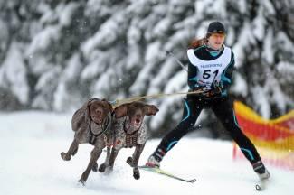 Bieganie z psem jako sport. Dla kogo skijoring?