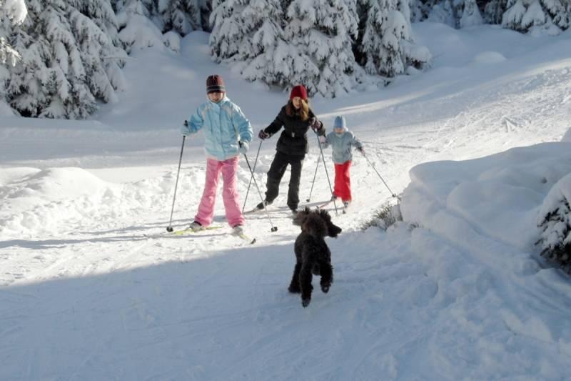 Czy w Jakuszycach będzie można legalnie biegać na nartach z psami?