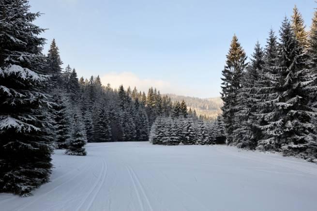 W Górach Bialskich i Masywie Śnieżnika po polskiej i czeskiej stronie łącznie jest przygotowanych nawet 220 km tras