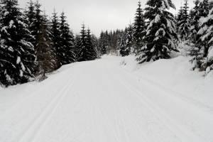 W Polsce można już biegać na nartach!