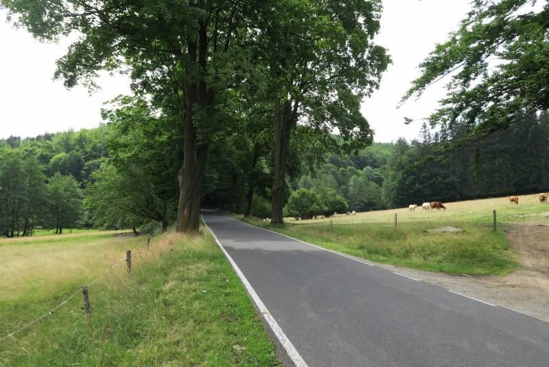 Zdjęcie z trasy Uphillu Gór Sowich