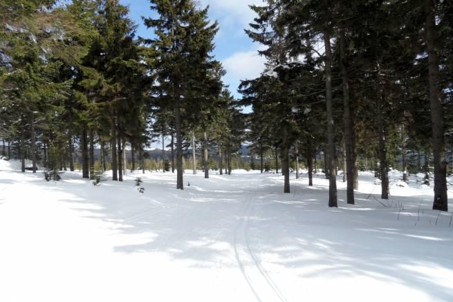 Na trasach biegowych śniegu więcej niż w lutym [GALERIA]