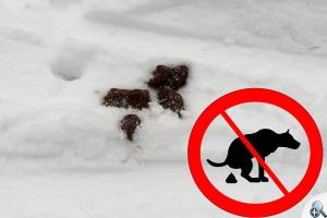 Psie kupy pozostawione przez psy biegające po trasach narciarskich